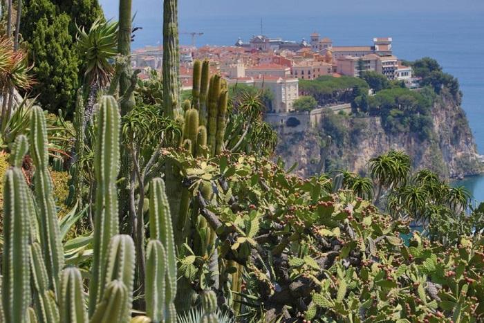 Cactos no Jardim Exotique em Mônaco