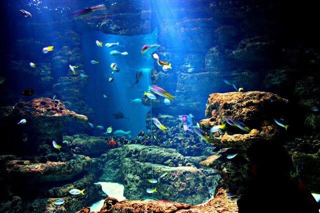 Aquarium Cinéaqua de Paris