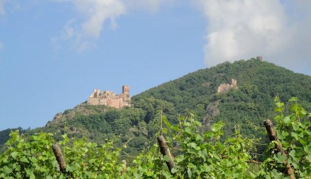 Vinícolas em Alsácia