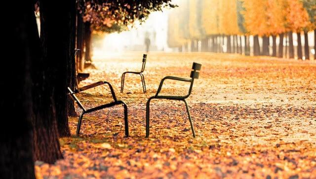 Árvores no outono em Paris