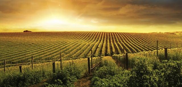 Vinícola em Bourgogne