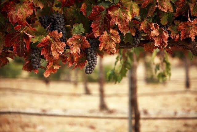 Vinícola em Provence