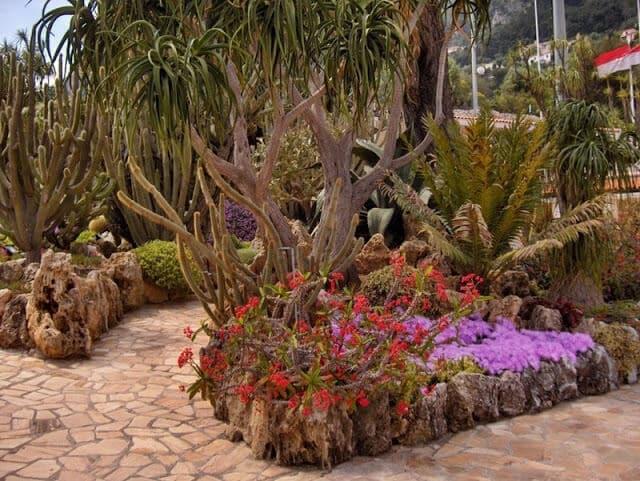 Plantas do Jardim Exotique em Mônaco