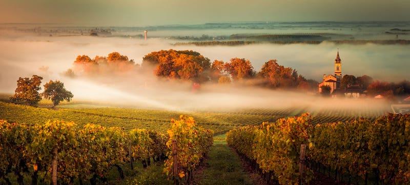 Vinícola no outono em Bordéus